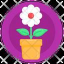 Flower Growth Flower Plantation Daisy Icon