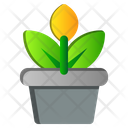Pot Flower Spring Icon