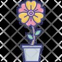 Flowering Plant Nature Beauty Pot Plant Icon