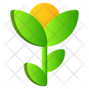 Flowers Rose Spring Icon