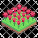 Tulips Field Flowers Garden Floral Garden Icon