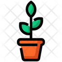 Flowers Pot Icon