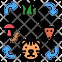 Food Chain Cycle Icon