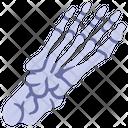 Foot bone Icon