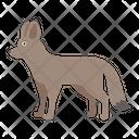 Megalotis Otocyon Fox Icon