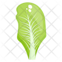 Spinach Leaf French Spinach Vegetable Icon