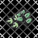 Fresh Herbs Green Icon
