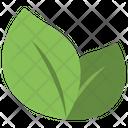 Fresh Leaves Herbs Icon