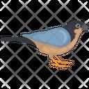 Fringillidae Icon