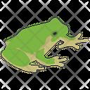 Frog Animal Chameleon Icon