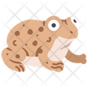Toad Frog Amphibian Icon