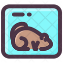 Frozen Groundhog Icon