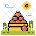 Fruit Tomato Agriculture Icon