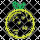 Fruit Fruits Grape Icon