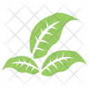 Shape Elaeagnus Angustifolia Icon