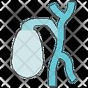 Organ Anatomy Gallbladder Bladder Icon