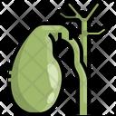 Gallbladder Organ Body Part Icon