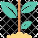 Gardening Plant Growing Icon