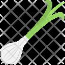 Garlic Allium Sativum Icon