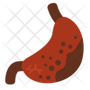 Gastric Gastric Ulcer Infection Icon