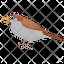 Sparrow House Finches Bird Icon