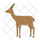 Dorkas Gazelle Animal Icon