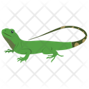 Gekkonidae Icon
