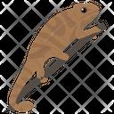 Gekkonidae Reptile Geckos Icon