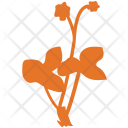 Basil Generic Herbs Icon