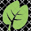 Generic Leaf Icon