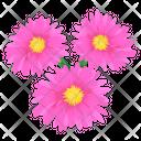 Gerbera Icon