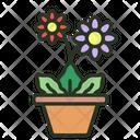 Gerbera Daisy Flower Gerbera Icon