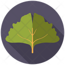 Medicine Ginkgo Tree Icon