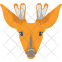 Giraffe Albino Animal Icon