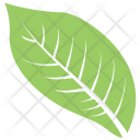 Goat Willow Leaf Icon