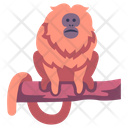 Golden Lion Tamarin Golden Marmoset Monkey Icon