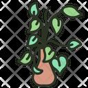 Golden Pothos Leaf Plant Icon