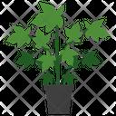Goldenseal Plant Icon