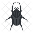 Beetle Goliath Insect Icon