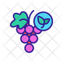 Organic Foods Grape Icon