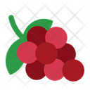 Grape Friut Food Icon