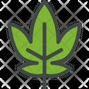 Grape Leaf Nature Icon