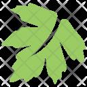 Grape Plant Tree Icon