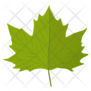 Grape Leaf Icon