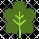Grape Vine Icon