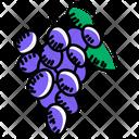 Fruit Grapes Edible Icon