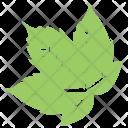Grapes Leaf Icon