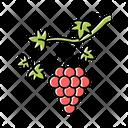 Grapevine Brush Grape Icon
