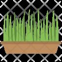 Green Grass Pot Icon