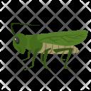 Grasshopper Animal Wildlife Icon